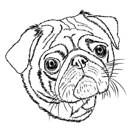 pug vector linear illustration on a white background. Vector