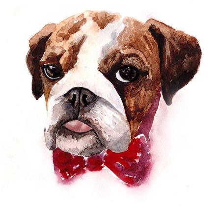 dog ears: English Bulldog, watercolor illustration on a white background.