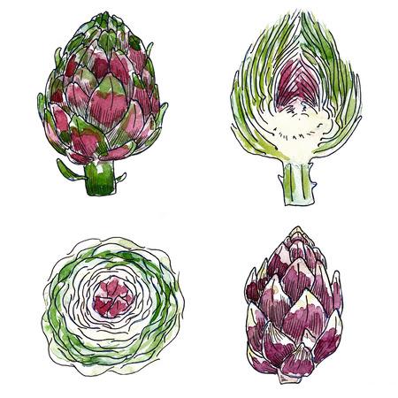 artichoke: Set of artichoke isolated on white background, watercolor illustration