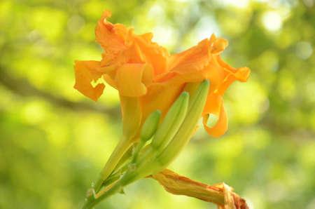 presure: Soul Flower
