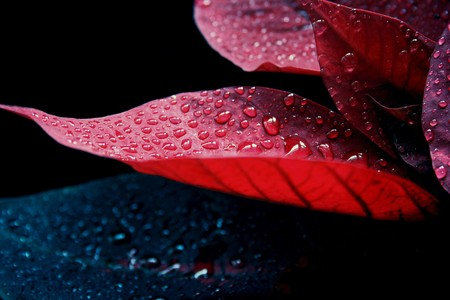 constraining: Melancholy red leaves