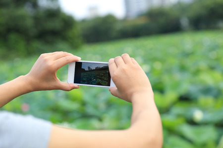 taking photo: woman hands taking photo with smart phone