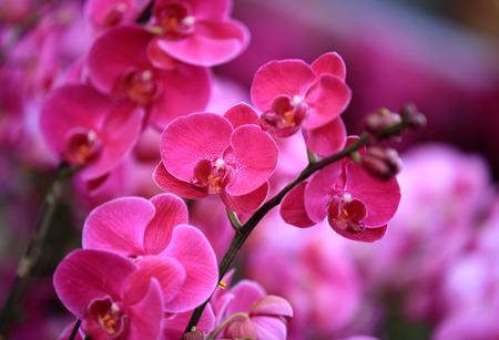 moth: pink moth flowers