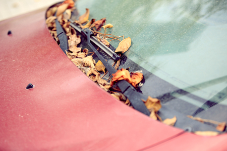 dumped: autumn fall leaves on dumped car windshield Stock Photo
