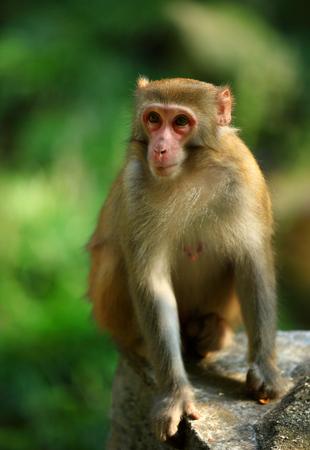 to sit: monkey sit on stone Stock Photo