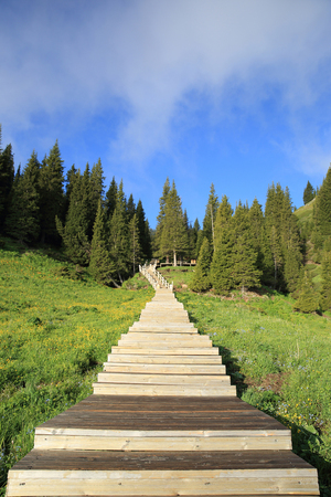 boardwalk trail: beautiful wooden boardwalk staircase hiking trail lead to forest