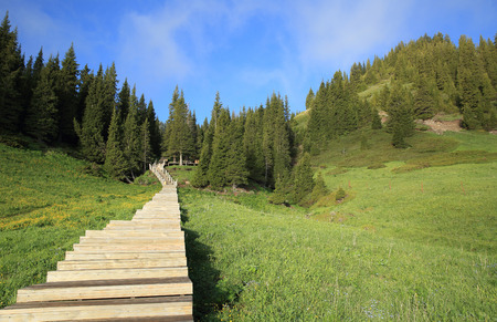 boardwalk trail: beautiful wooden boardwalk staircase hiking trail lead to forest mountain peak