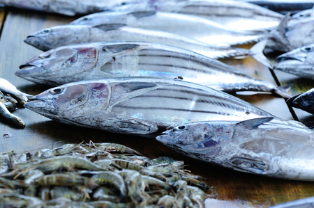 sardine: closeup of fresh fish selling on local market Stock Photo