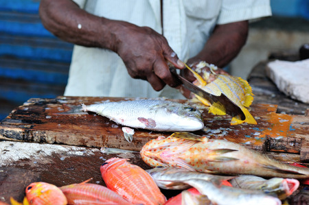 fresh fish selling on the market