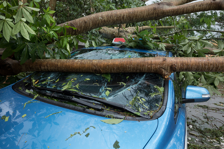 Broken tree fallen on top of parking car, damaged car after super typhoon Mangkhut in China on 16 Sep 2018