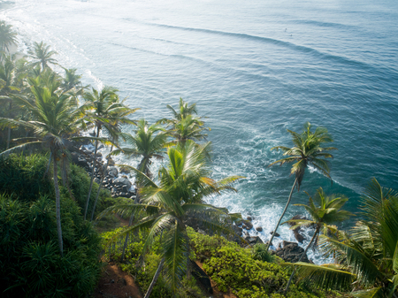 Aerial view of coconut trees at seaside and surfers surfing in the water, Sri lanka