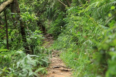 Trail hiding in tropical forest