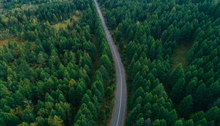 Aerial drone view of trail in colorful autumn forest