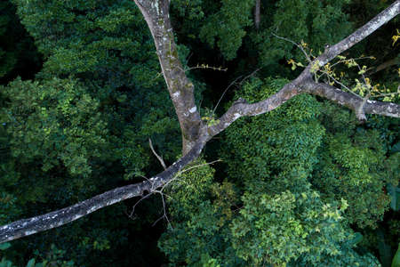 Aerial view of tree in summer tropical forest