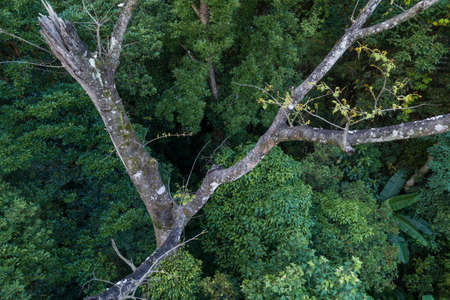 Aerial view of tropical forest in summer Banco de Imagens