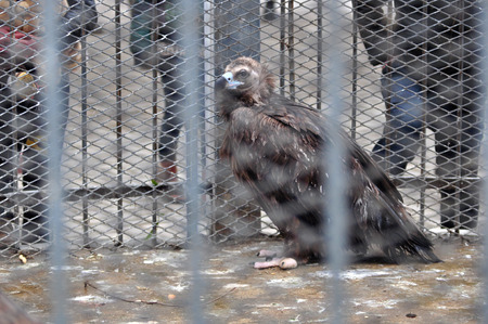 plunder: Bird in the cage