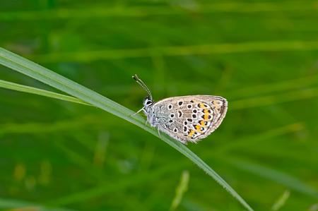 haulm: Moth on green haulm.