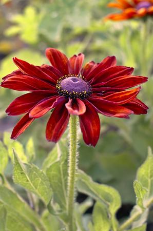 花びら: Flower petals and purple with scarlet stamens.
