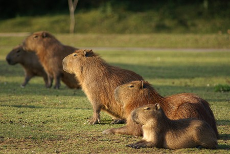 a group of mammals            Stock Photo