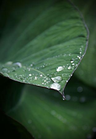 fresh morming drops