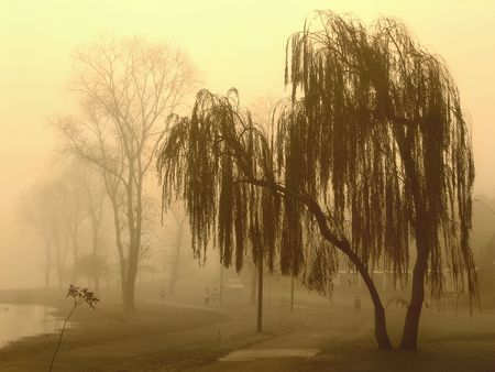 trees in a foggy day in winter season Stock Photo