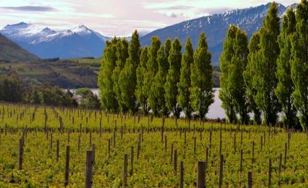 treeline: New Zealand vineyard enjoying a treelined lake and mountain view