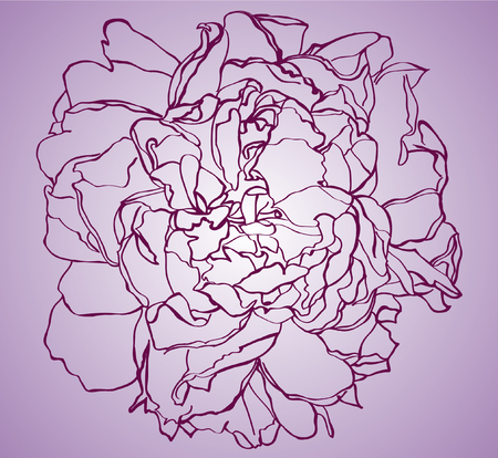 Beautiful peony bouquet. Hand drawn vector illustration Illustration
