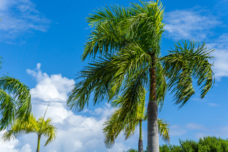 Palm Tress in Paradise Stock Photo