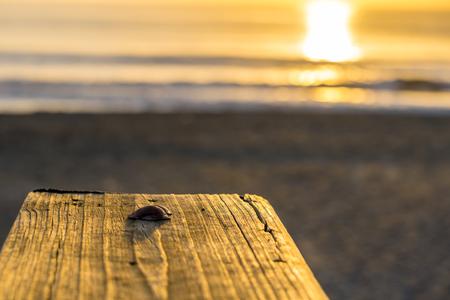 Sea Shells on a Ledge with a Sunrise