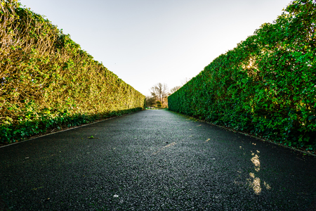 Hedges down a walkway Stok Fotoğraf
