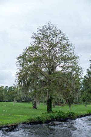 Weeping Willow Tree Stok Fotoğraf