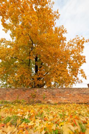 Fall Leaves and Brick Wall