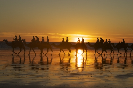 Camels on Cable Beach Stock Photo
