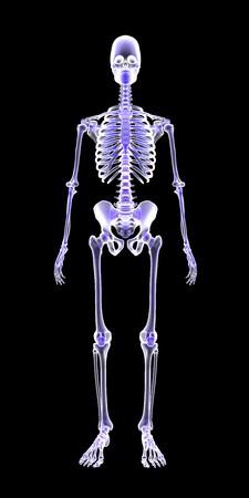 Blue Human Anatomy Skeleton 3D Scan render on black background 스톡 콘텐츠