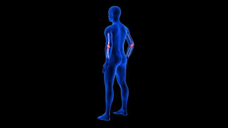 Elbow Pain illustration from rear view. Blue Human Anatomy Body 3D Scan render - black background