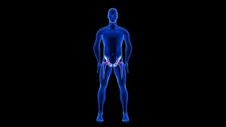 Hip Pain illustration. Blue Human Anatomy Body 3D Scan render on black background Фото со стока