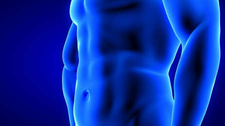 male fitness body transformation, abdominal muscles detail - muscle mass building illustration on blue background