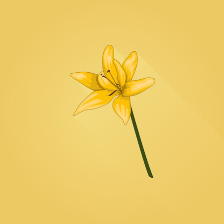 Illustration of yellow lilium flower.