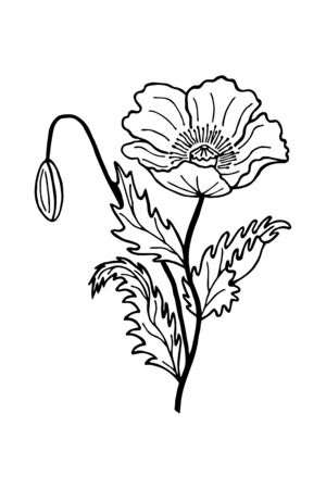 flower bud poppy coloring book. Vector illustration of hand drawing