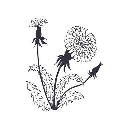 bush of dandelions flowers, leaves. eps10 vector illustration. hand drawing