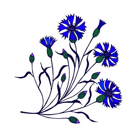 cornflower flowers on a stem with leaves. vector stock illustration. hand drawing.