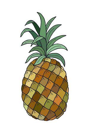 pineapple fruit. vector stock illustration. hand drawing.