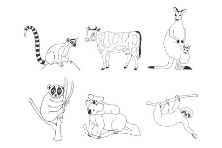 set of animals. Ring-tailed lemur, lumpy, katta. cow with spots. Kangaroo with a baby kangaroo in a bag. lemur lory. koala. sloth on a branch. eps10 vector stock illustration. hand drawing. out line