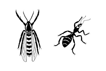insects ant and hornet.