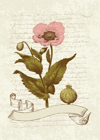 Vintage Card with Poppy flower- for invitation, greetings, congratulation, wedding Vector