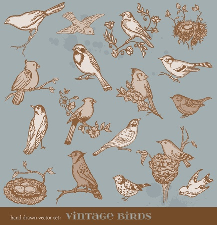 bird on branch: Hand drawn vector set: birds - variety of vintage bird illustrations