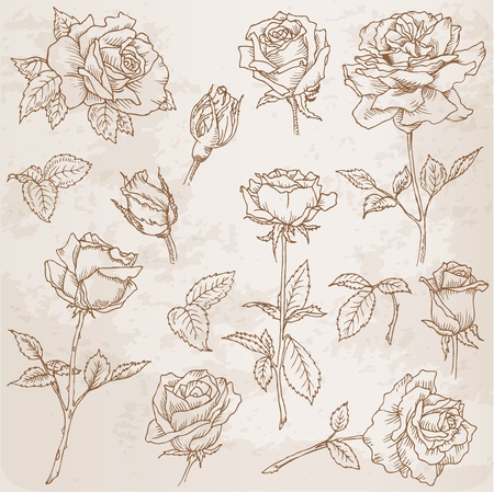 etched: Flower Set: Detailed Hand Drawn Roses in vector Illustration