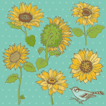 Flower Set: Detailed Hand Drawn Sunflowers Vector