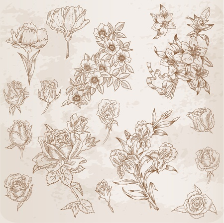 etched: Detailed Hand Drawn Flowers - for scrapbook and design in vector