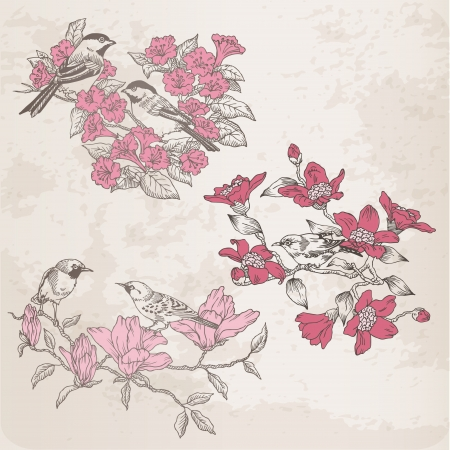 birds on branch: Retro Illustrations - Flowers and  Birds - for design and scrapbook